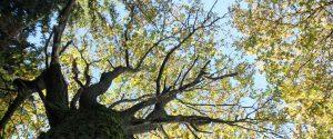 elmer Natur Baum mit blätter