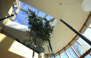Elmer Wintergarten Galerie mit Ficus benjamina
