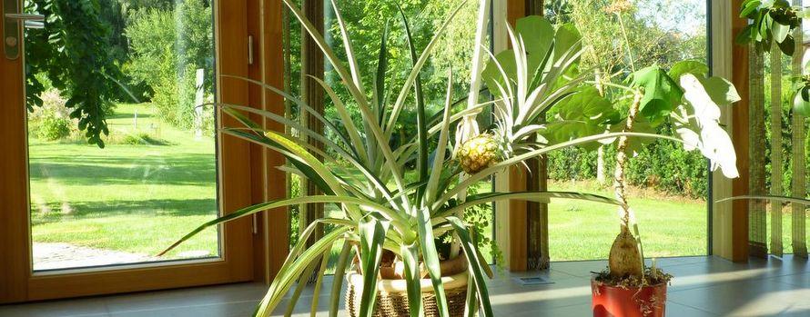 ananas im elmer wintergarten